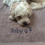 dog towel