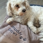 dog towel2